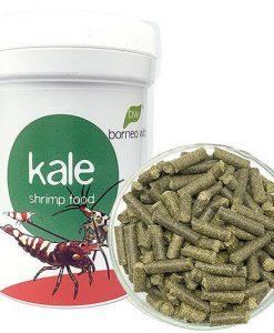 BorneoWild-Kale.jpg